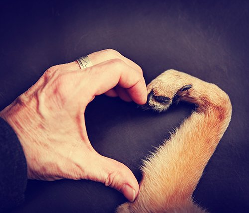 heart_paws